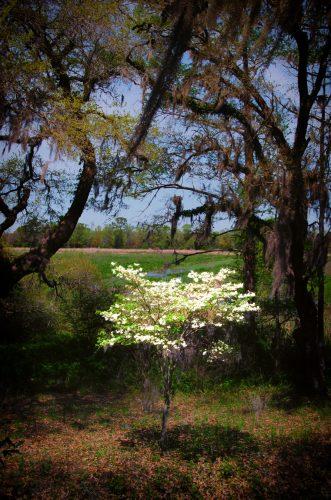 """Dogwood Hope in the Ricefield"" Margo Millure (www.margomillurephotography.com)"